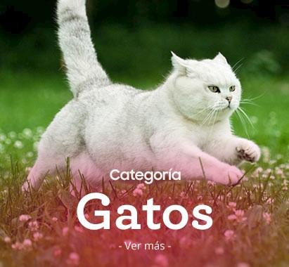 411x380-gatos.jpg