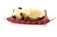 Juguete Gato Decorativo Tan Siamese Tabby Mini Petzzz 20 cm MP-3061