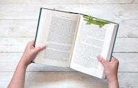 Seprador Para Libros cocodrilo